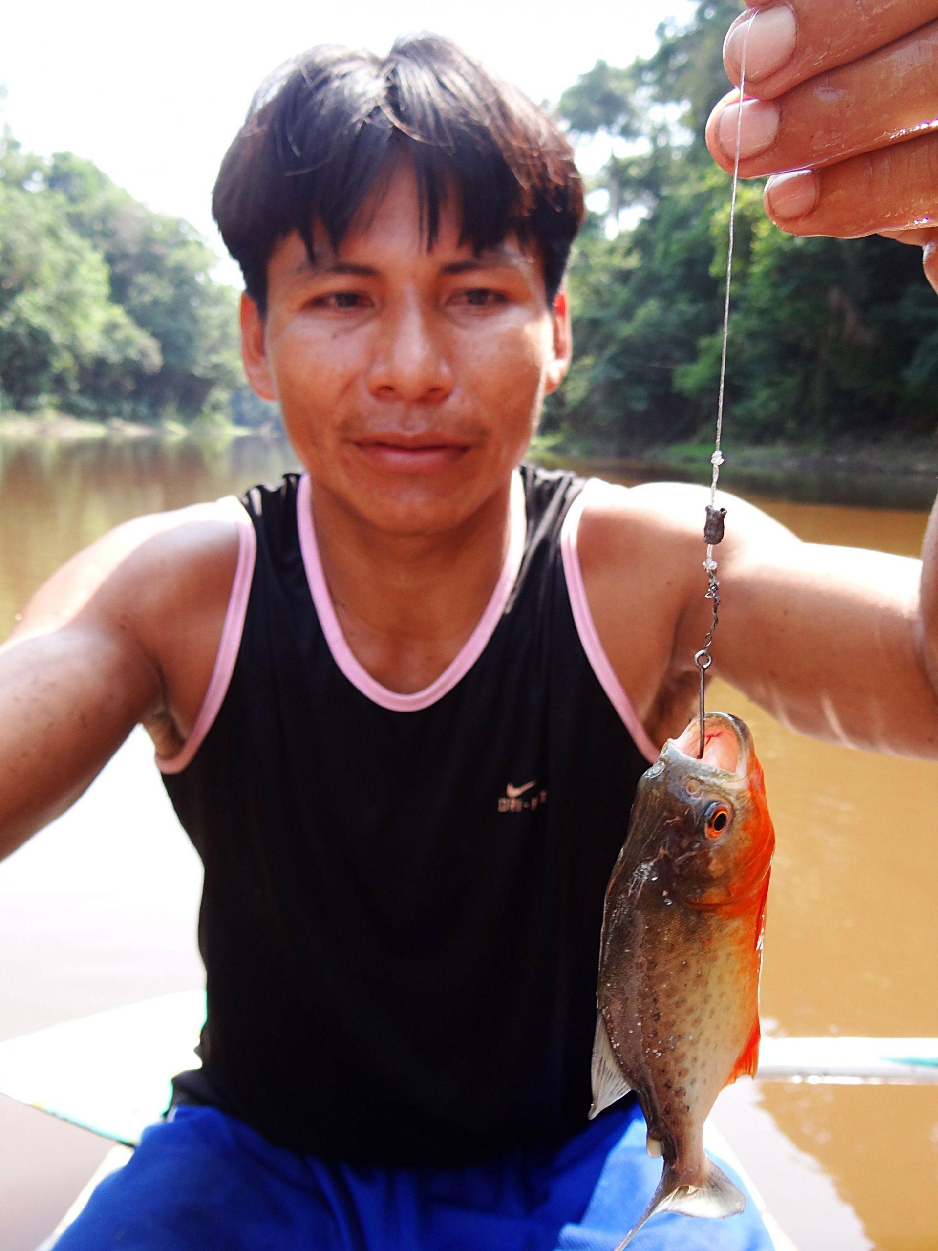 Piranha fishing, Rio Cumaceba, Peru